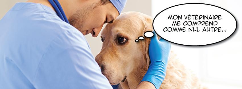 Clinique vétérinaire St-Louis